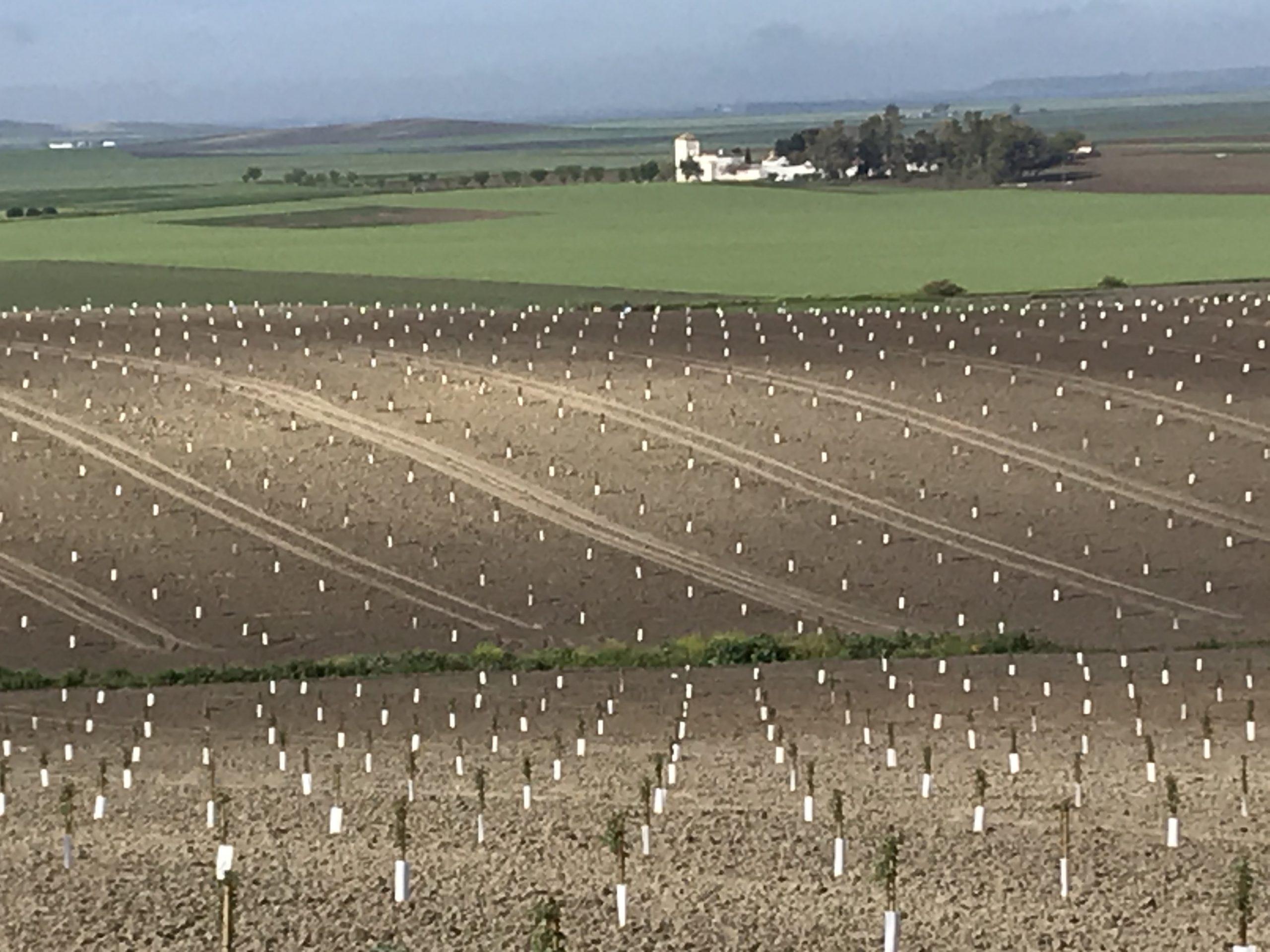 Nuevas Plantaciones