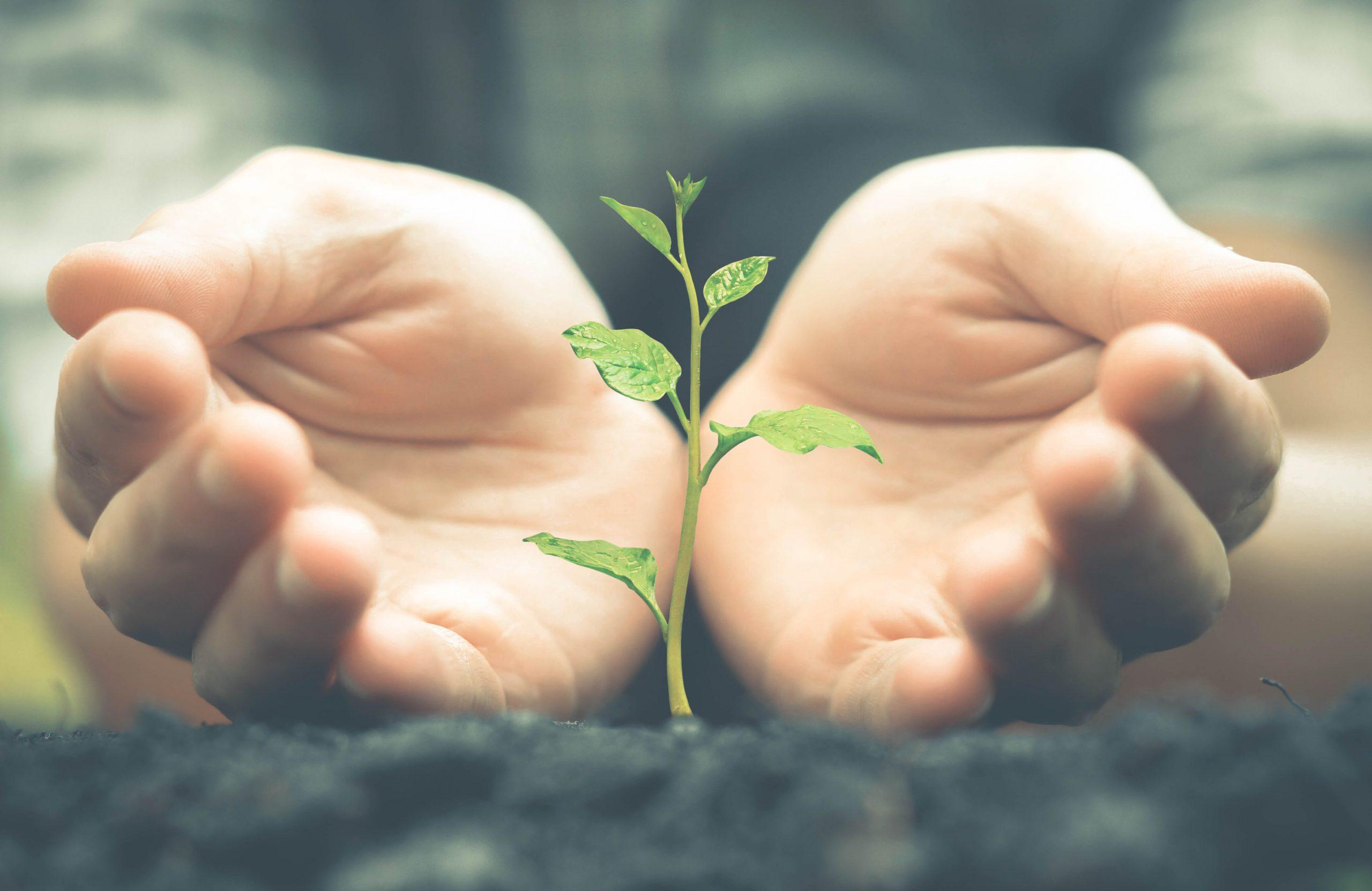 Ökologische Zertifizierung